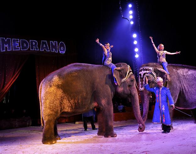 Légende indienne-Les fameux éléphants du cirque Medrano / Copyright Cirque Medrano