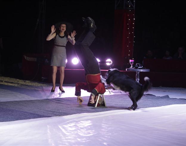 Les chiens comédiens des Marckiewich / Copyright Le Grand Cirque Sur l'Eau