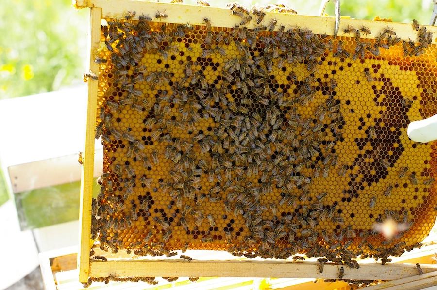Henry Duchemin aide les entreprises à faire leur miel