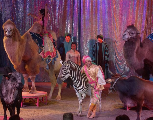 Le conte des 1001 nuits-Le grand groupe d'animaux exotiques / Copyright Cirque Medrano